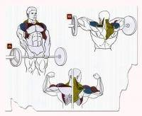 Остальные виды спорта: базовые упражнения  чтобы прокачать необходимые группы мышц