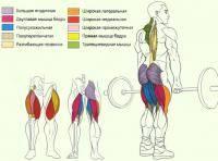 Остальные виды спорта: Нужна ли становая тяга тяжелоатлету