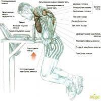 Остальные виды спорта: как накачать дельтовидные мышцы на турнике и брусьях