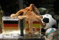 Новости футбола: А что Вы думаете по поводу предсказаний осьминога Пауля