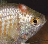 Остальные виды спорта: Болезни рыб