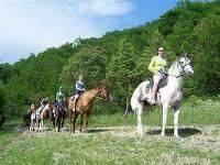 Остальные виды спорта: Конные походы  Кто ходил  поделитесь впечатлениями