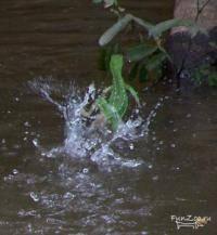 Легкая атлетика: Вода после бега
