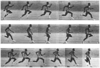 Легкая атлетика: что нужно делать чтобы пресс был виден в расслабленном виде