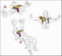 Легкая атлетика: Мышцы груди