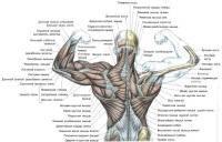 Боль в груди слева при нажатии