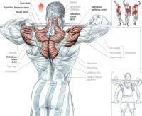 Единоборства: Как набрать мышечную массу