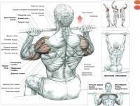 Фитнес и бодибилдинг: Есть ли различия между жимом штанги и жимом гантелей на грудь