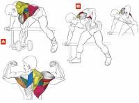 Фитнес и бодибилдинг: Широчайшие мышцы спины крылья