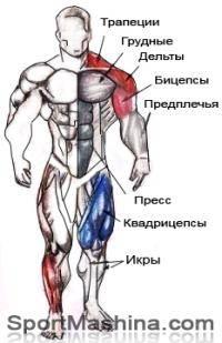 Фитнес и бодибилдинг: Боль в кистевых суставах