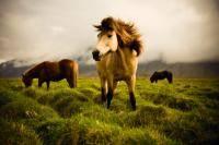 Экстремальные виды спорта: Родители ни в какую не хотят покупать лошадь   уже не знаю как вымаливать   и все из за того что они